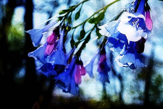 Bluebell 11 by Galen Puronen