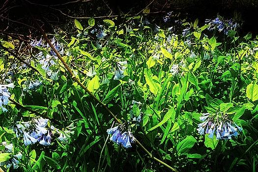 Bluebell 12 by Galen Puronen