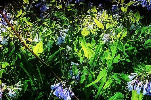 Bluebell 14 by Galen Puronen