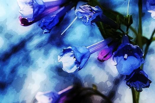 Bluebell 17 by Galen Puronen