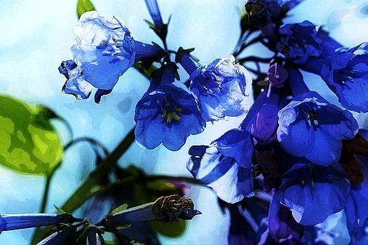 Bluebell 18 by Galen Puronen