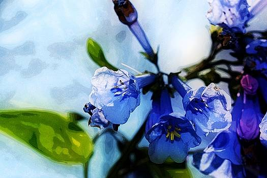 Bluebell 19 by Galen Puronen