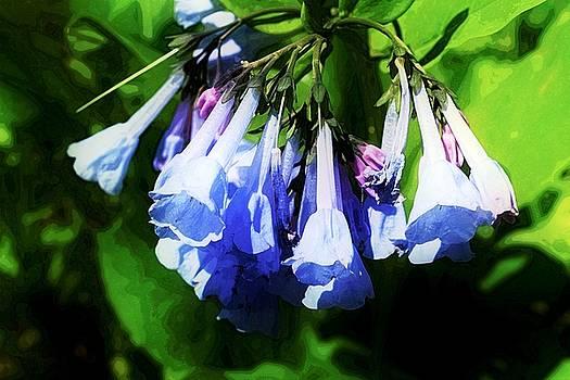 Bluebell 21 by Galen Puronen