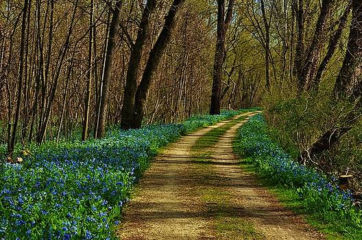 Bluebell Explosion by William Fox