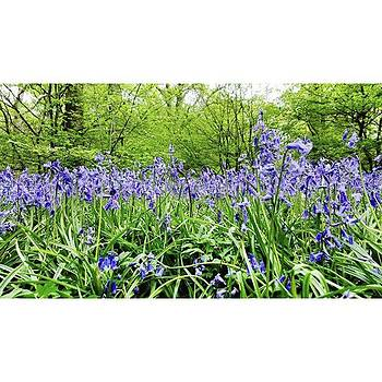 #bluebell #flowers #spring  #woodland by Natalie Anne