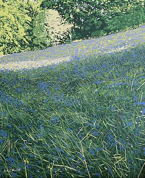 Bluebell knoll by Malcolm Warrilow