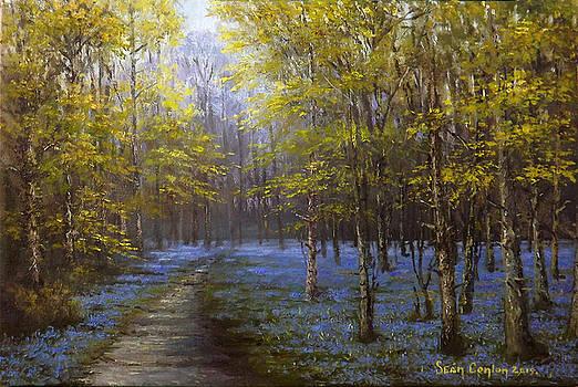 Bluebell Splendour in Garryhinch by Sean Conlon