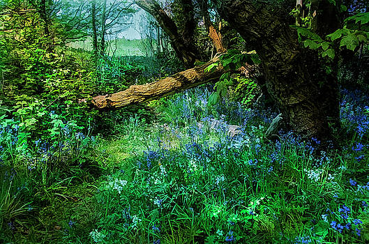 Bluebell time by Brian Tarr