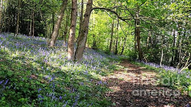 Bluebell Walk 2 by John Chatterley