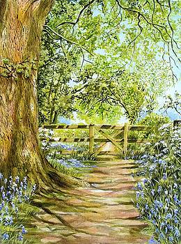 Bluebell Wood by Frances Evans