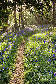Bluebell woodland path with dreamy sunrise by Simon Bratt Photography LRPS