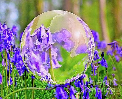Bluebells by Beth Jacobs