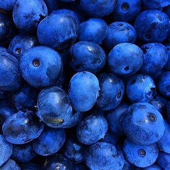 Blueberries Freshly Picked Tasmania by Paul Dal Sasso