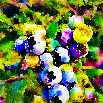 Ronda Broatch - Blueberry Bright