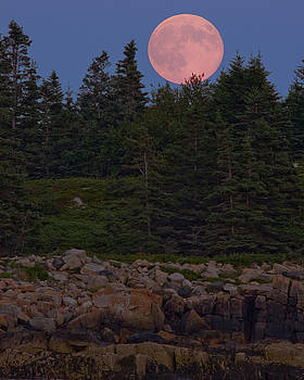 Blueberry Moon by James Cormier