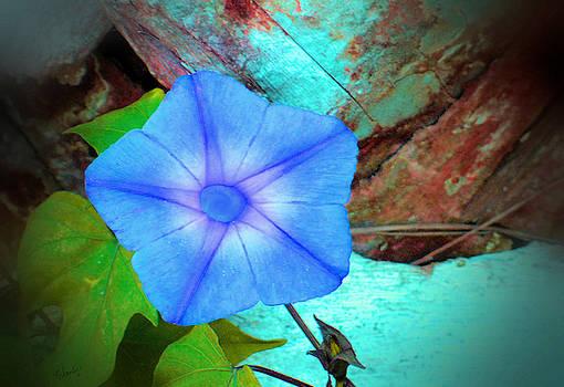Blueberry Morning Glory by Rosalie Scanlon