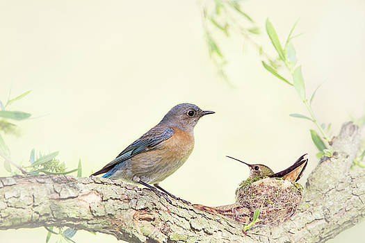 Bluebird and Baby Hummer by Susan Gary