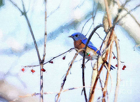 Bluebird and Berries by Kerri Farley