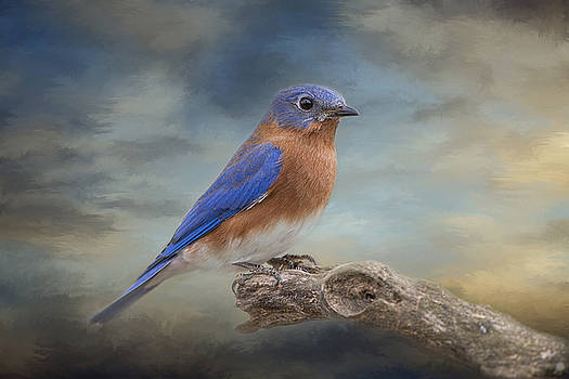 Bluebird and Blue Skies by Bonnie Barry