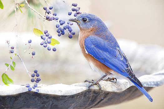 Bluebird Dreams by Bonnie Barry