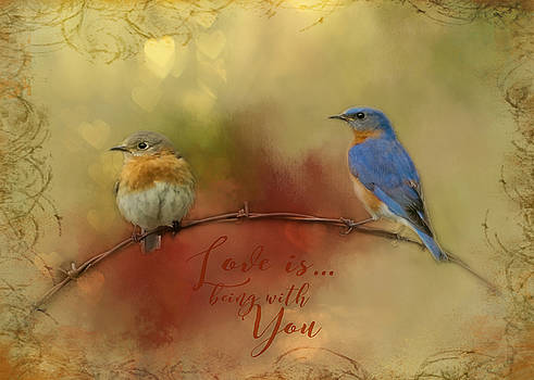 Bluebird Happiness by TnBackroadsPhotos