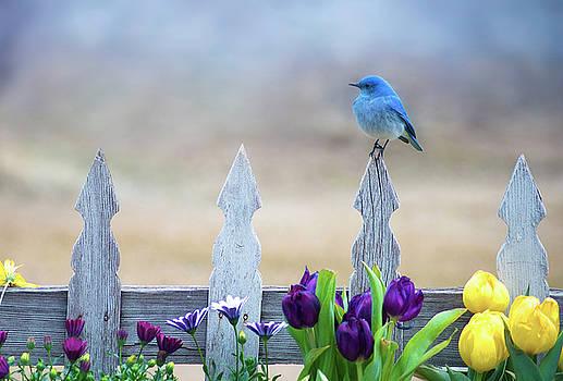 Bluebird in the Garden by Scott Wheeler