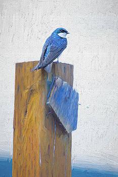 Bluebird by James BO Insogna