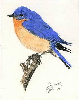 Bluebird by Jesska Hoff