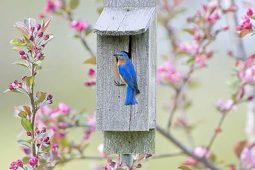 Bluebird Nesting Box by Bonnie Barry