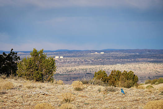 Bluebird of Happiness on the Mesa by Mary Lee Dereske