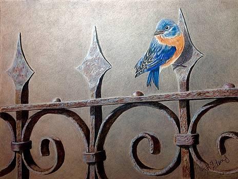 Bluebird on fence by Michelle McAdams