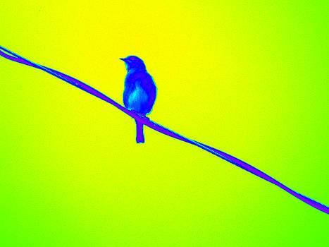 Bird on A Wire by Nola Hintzel