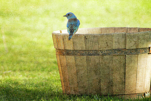 Susan Gary - Bluebird Resting on Bucket, Textured