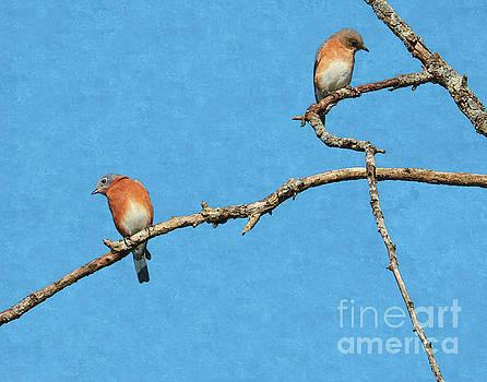 Bluebirds on a Crazy Limb by Anita Oakley