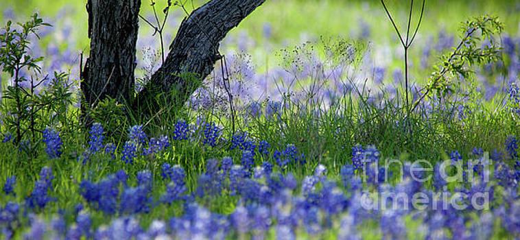 Bluebones by Iris Greenwell