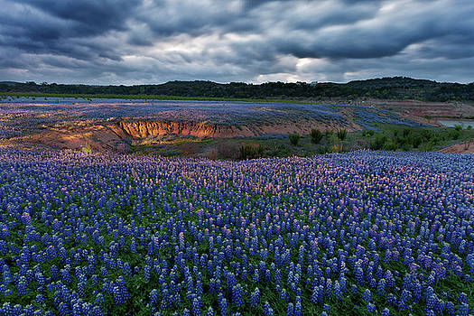 Bluebonnet Glow by George Gilchrist