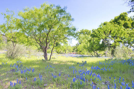 Bluebonnet Meadow by Bonnie Barry