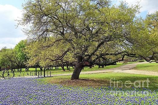 Bluebonnet Time in Texas by Janette Boyd