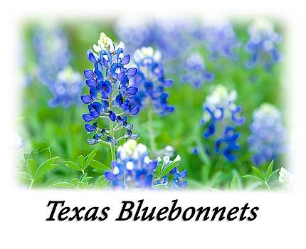 Bluebonnet With Font T-Shirt by Rospotte Photography