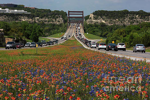 Herronstock Prints - Bluebonnets and Indian Paintbrush wildflowers bloom along the 36