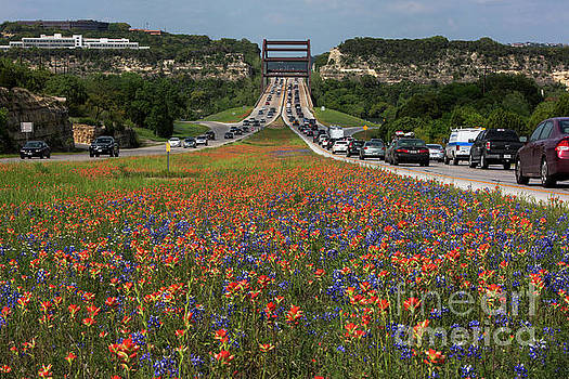 Herronstock Prints - Bluebonnets and Indian Paintbrush wildflowers frame the 360 Brid