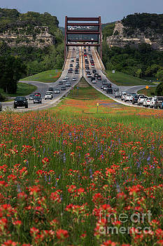 Herronstock Prints - Bluebonnets and Indian Paintbrush wildflowers line the 360 Capit