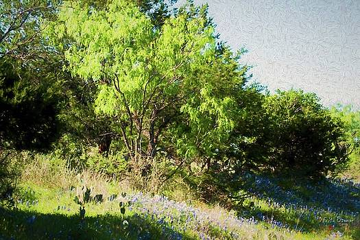 Bluebonnets and Mesquites at Sunset  5550  by Fritz Ozuna