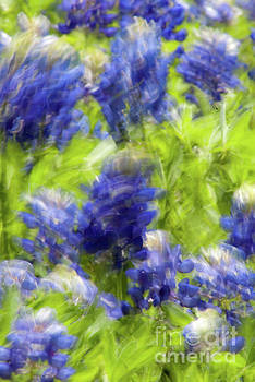 Bluebonnets in Motion by Justin Bower