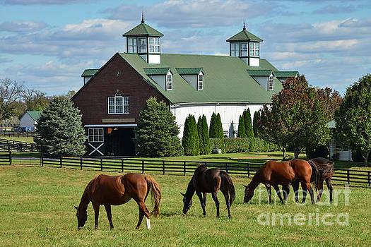 Bob Phillips - Bluegrass Horse Farm