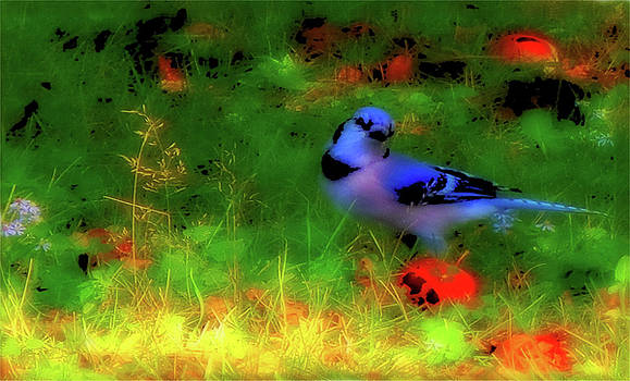 Mike Breau - Bluejay-Fall Approaching-A Rainbow Play of Colors
