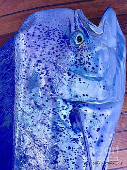 Blues Mahi by Carey Chen