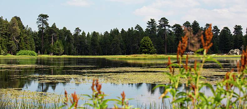 Bluff Lake CA Wild Flowers 12 by Chris Brannen