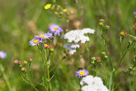 Bluff Lake CA Wild Flowers 6 by Chris Brannen