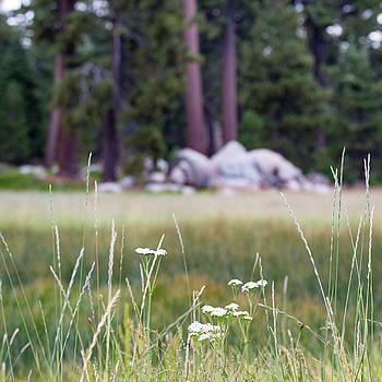 Bluff Lake CA Wild Flowers 9 by Chris Brannen